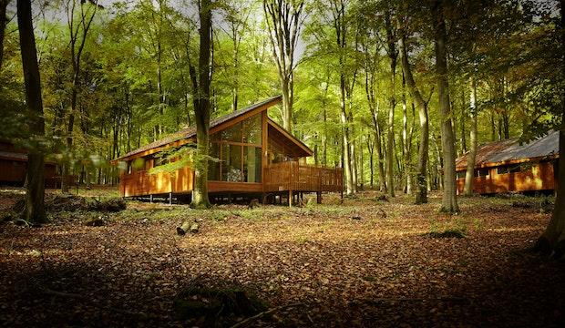 Forest Holidays Blackwood Forest